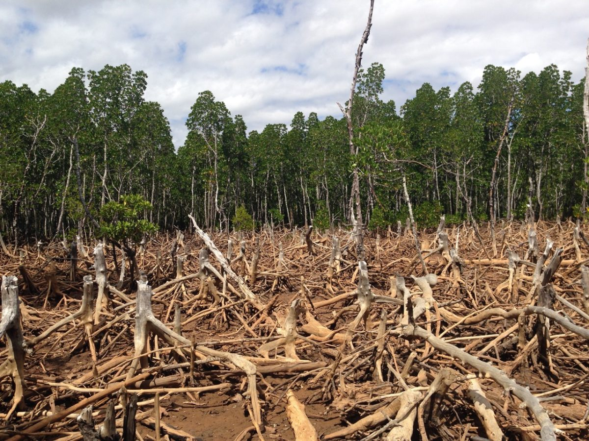 Deforestation – What is so bad about it?