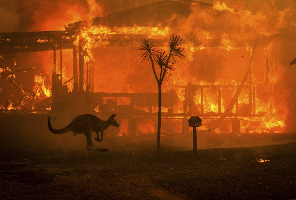 What you can do about the Australian Fires of 2019/2020