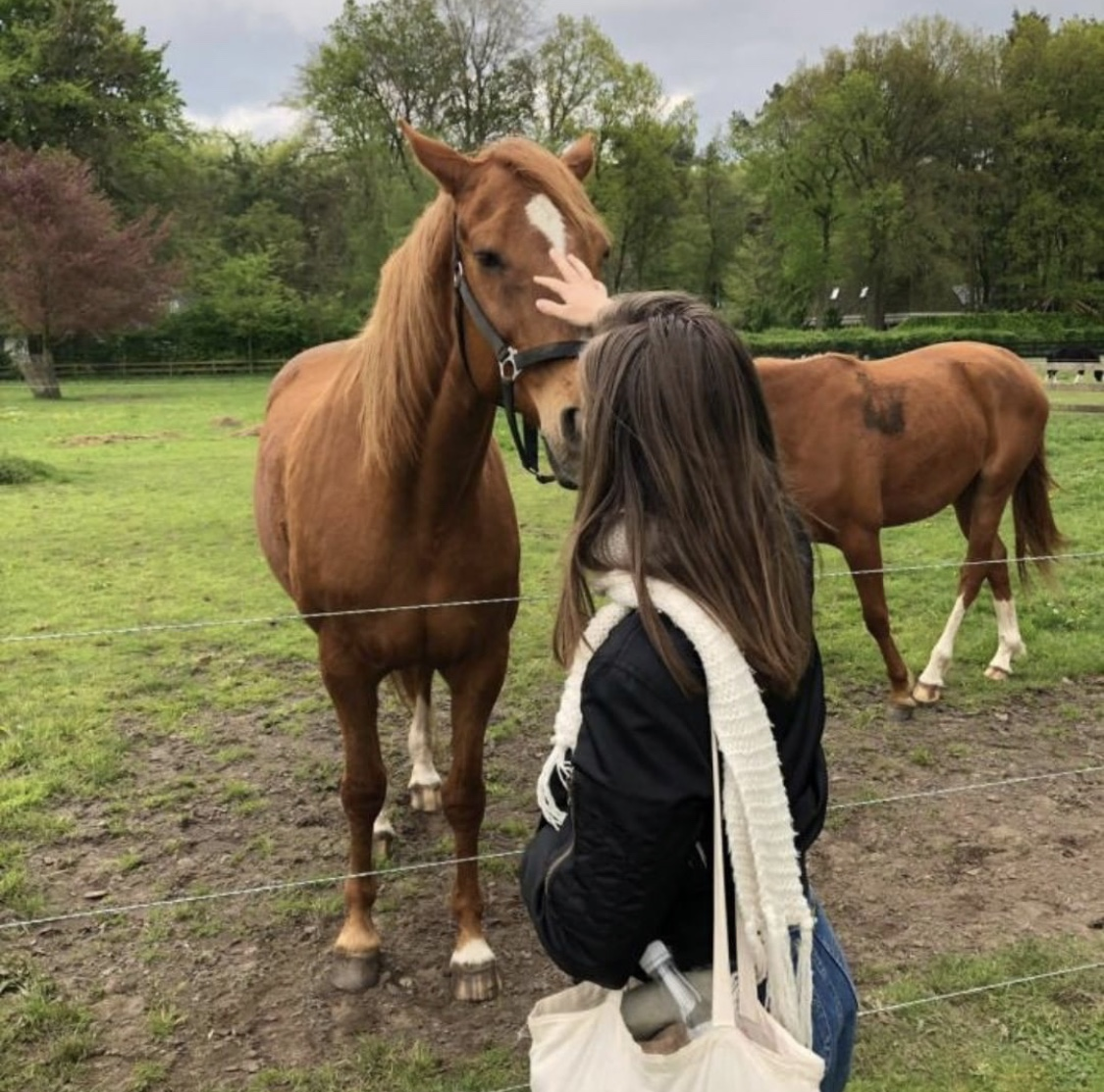 Ethical reasons why I don't approve horse-riding